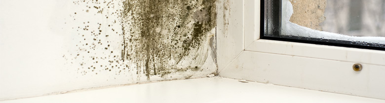 Practical Advice for Identifying and Dealing with Damp